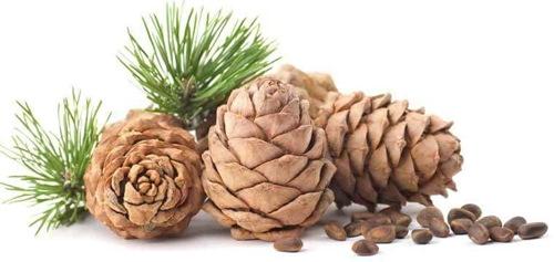 Pinecone background image